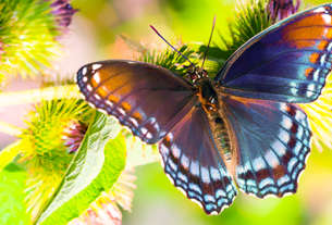 Mơ thấy bướm đánh con gì?