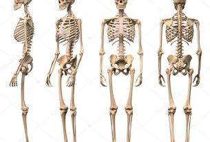 Mơ thấy xương người