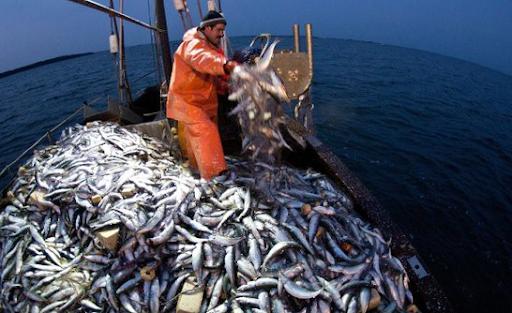 Mơ thấy bắt được nhiều cá