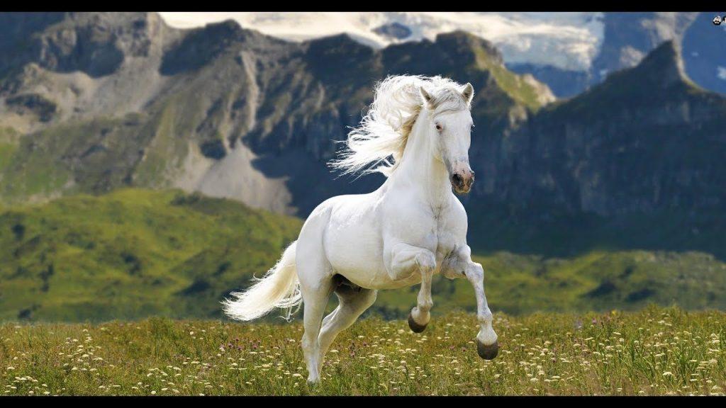 Mơ thấy con ngựa